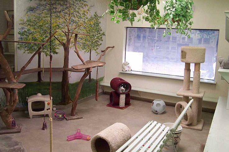 Cat Room Design Ideas Cat stuff Pinterest Cat
