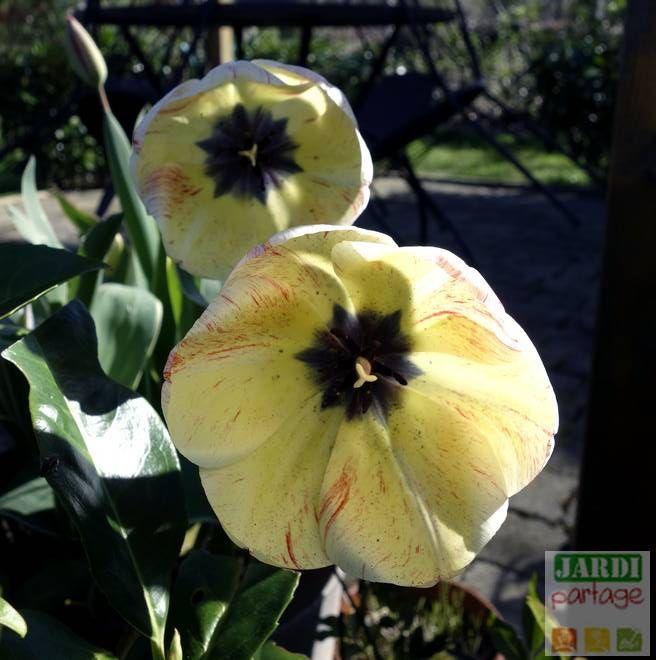 10 secrets pour planter et réussir les tulipes | Planter des tulipes, Planter tulipes, Comment ...