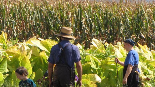 Come si diventa un giovane agricoltore
