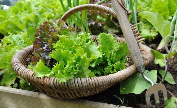 Gemüseanbau in Holzrahmenbeeten #beetanlegen