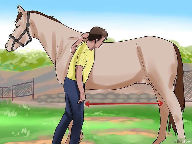 Clean The Sheath Of A Horse Horses Horse Care Horse Braiding