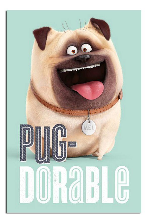 The Secret Life Of Pets Mel Pug Dorable Poster New Maxi Size 36 X 24 Inch Secret Life Of Pets Pet Pug Pugs