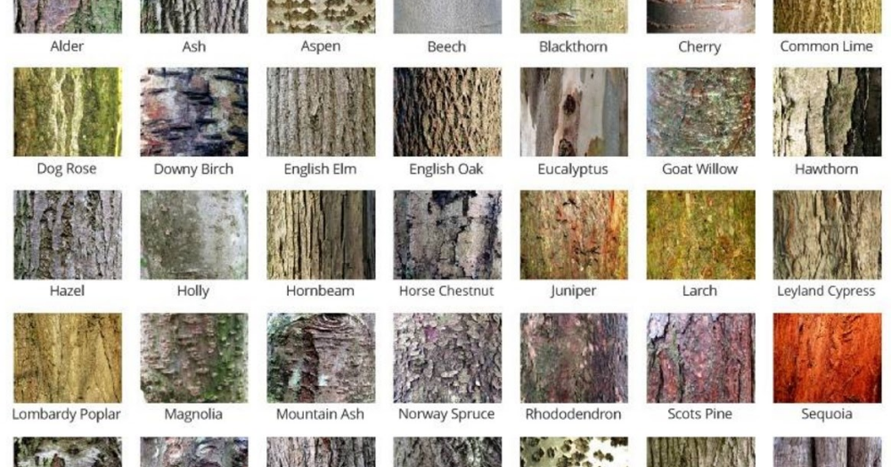 Bark Poster A Number Of People Have Asked Me To Produce The Bark Gallery On The Right As A High Reso Tree Bark Identification Tree Identification Chart Tree Id