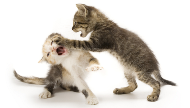 A Social Media Photo Sharing Smackdown Instagram Vs Twitter Happy Cat Kittens Cats