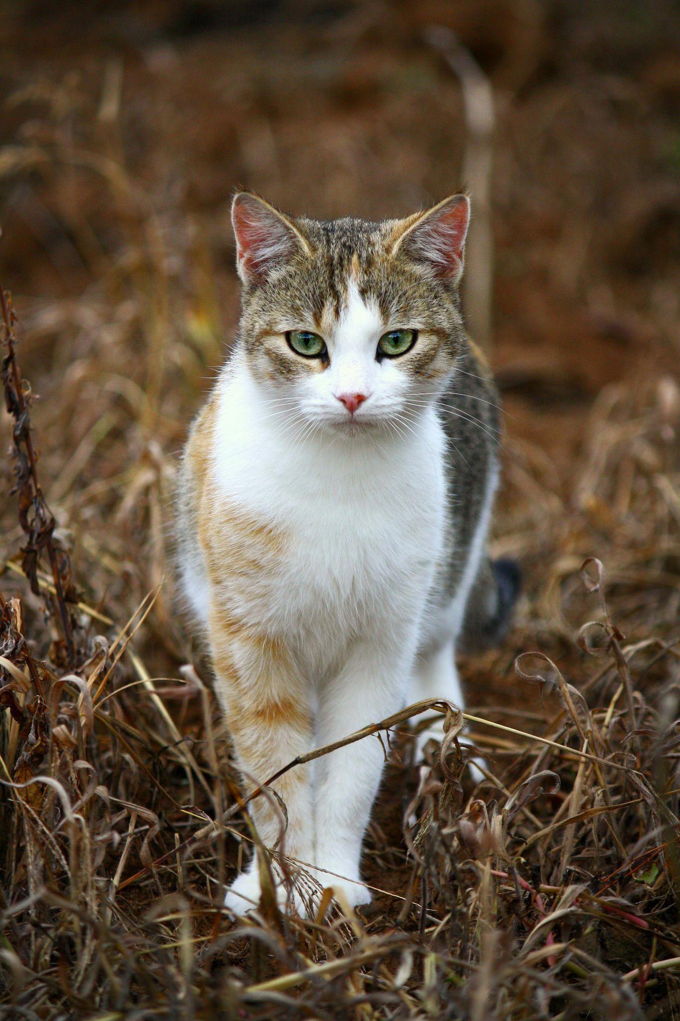 cute cat catsaesthetic Cute cats, Cool cats, Cute cats