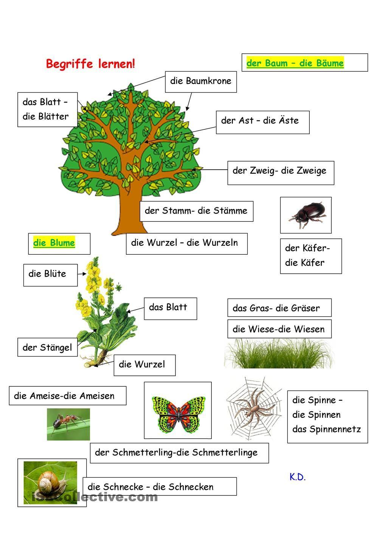 Begriffe lernen   Deutsch lernen, Deutsche sprache lernen, Wald ...