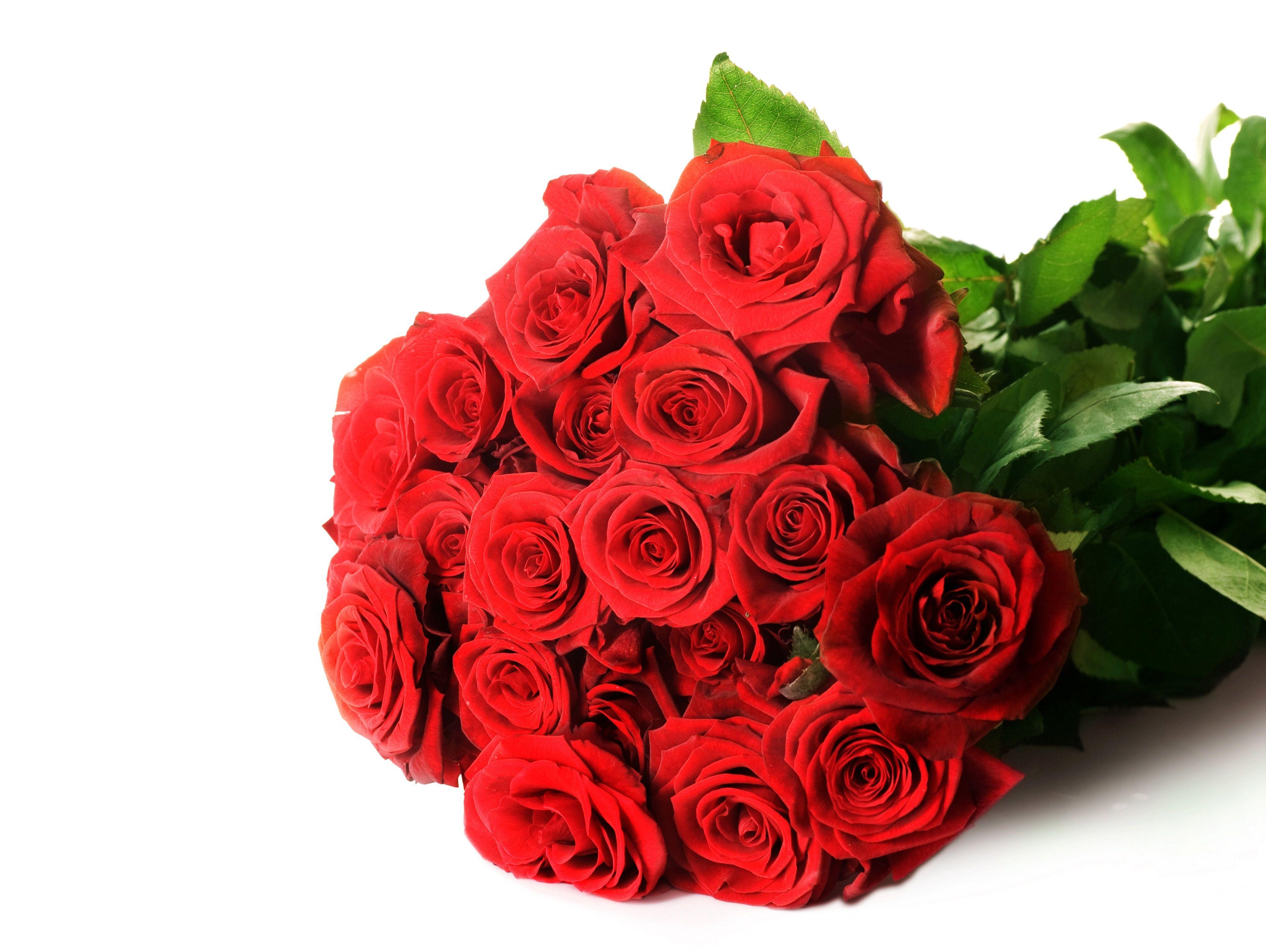 3840x2888 Red Roses 4k Hd Wallpaper For Desktop Com Imagens
