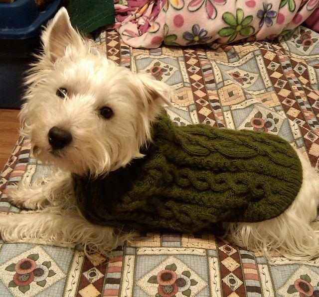 Free Pattern 102 43 Knitted Dogcoat Knit It Pinterest Free