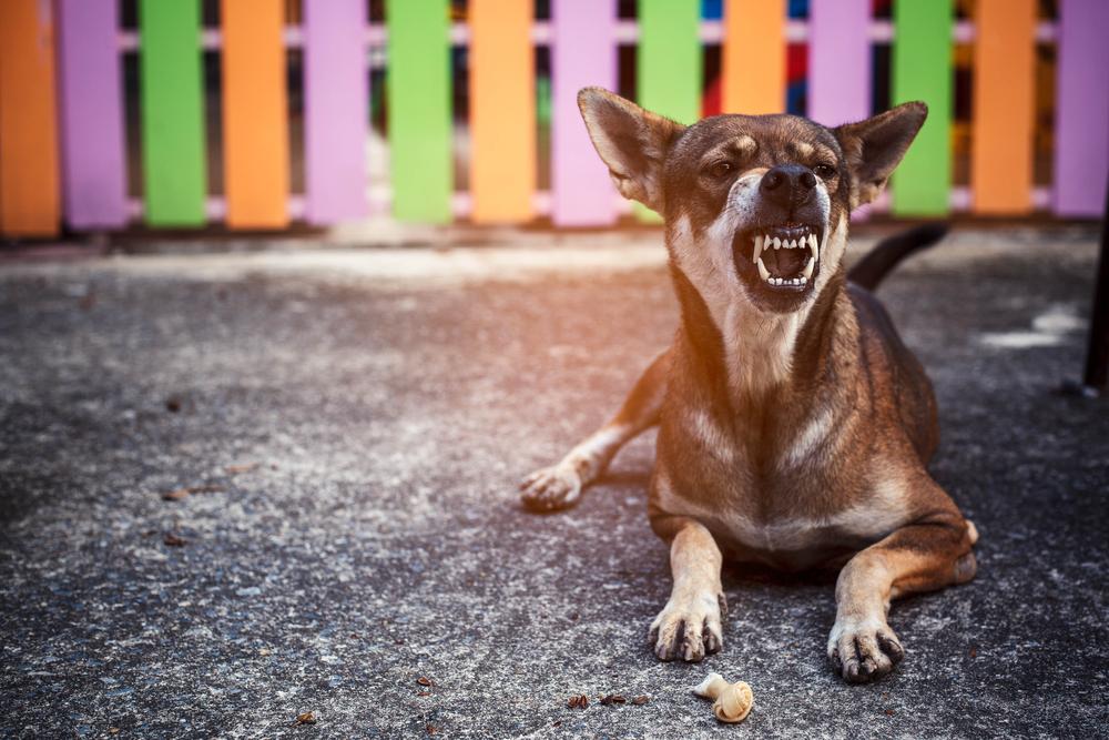 Angry Dog Angry Dog Angry Dog Dog Growling Rich Dog