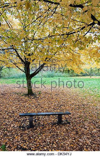 images of Regents Park London - Google Search