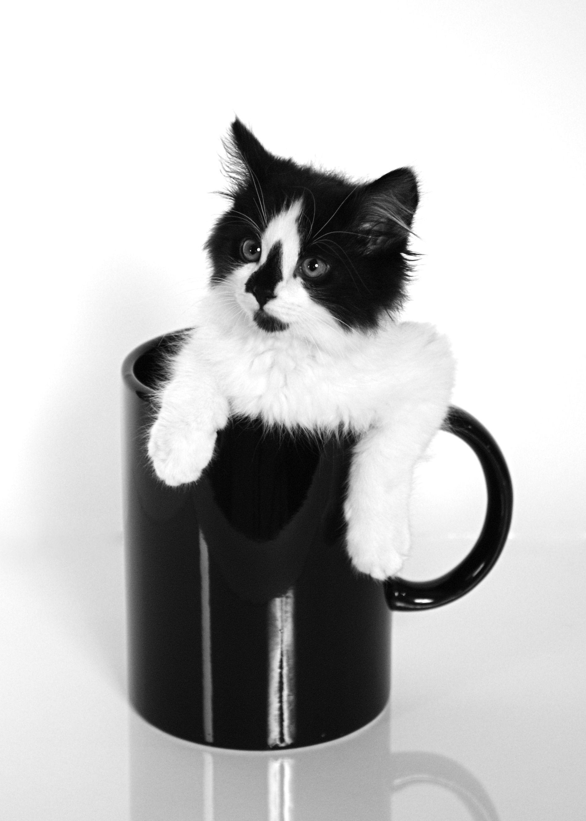 A cute kitten sitting in a cup 😍☕️🐱 kitten cute cat
