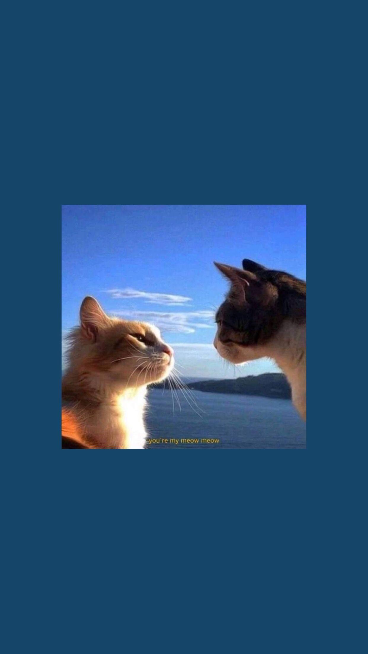 meow meow -  aesthetic wallpaper ✿ #wallpaper #phone #lockscreen #aesthetic #cats  - #allergictocats #catcat #cattattoo #catwallpaper #catsandkittens #crazycats #dogcat #MEOW #petscats