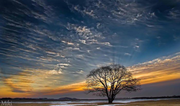 早春の朝日と木、空のコントラストが美しい写真。 木が逆光になっていることで、印象的で魅力的な写真になっています。