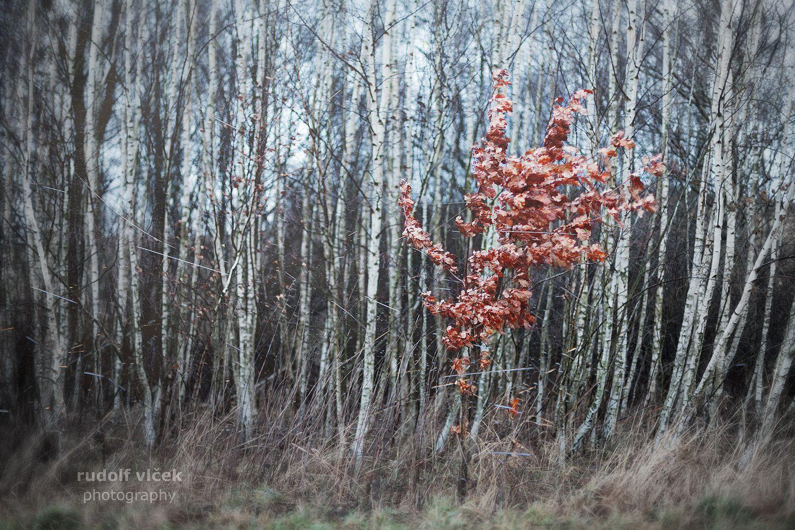 https://flic.kr/p/C9ivuA | Oak | Oak getty images portfolio prints available here: kelehen.deviantart.com/prints