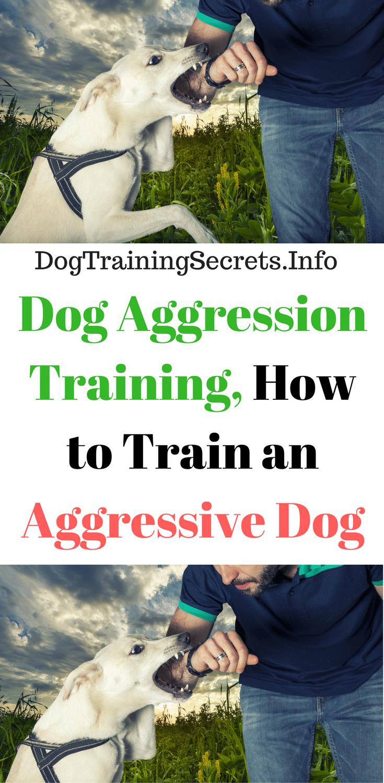 Dog Training Secrets – Aggression