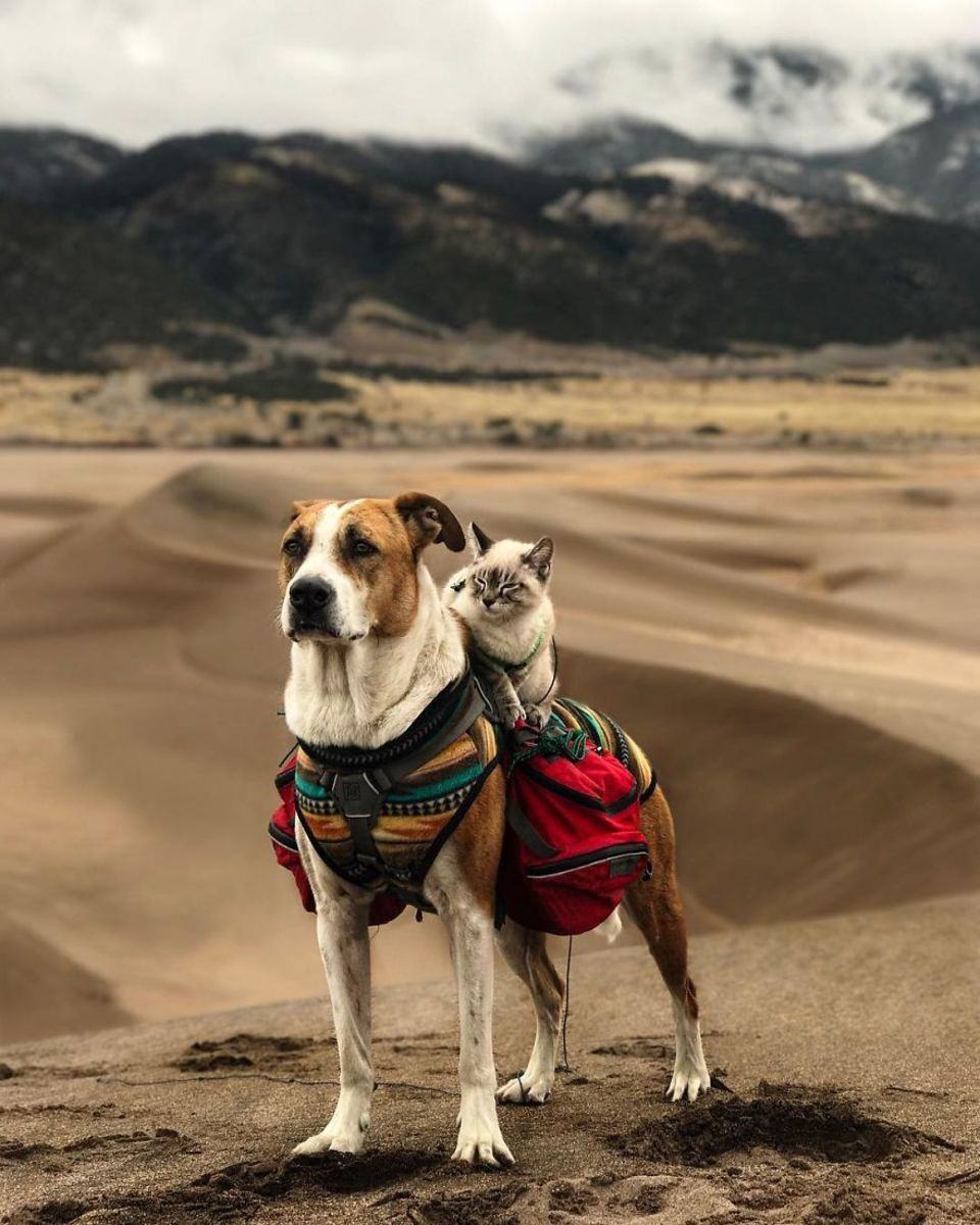 This Cat And Dog Duo Love Travelling Together And They Take The - Cat and dog duo take the best travel photos ever