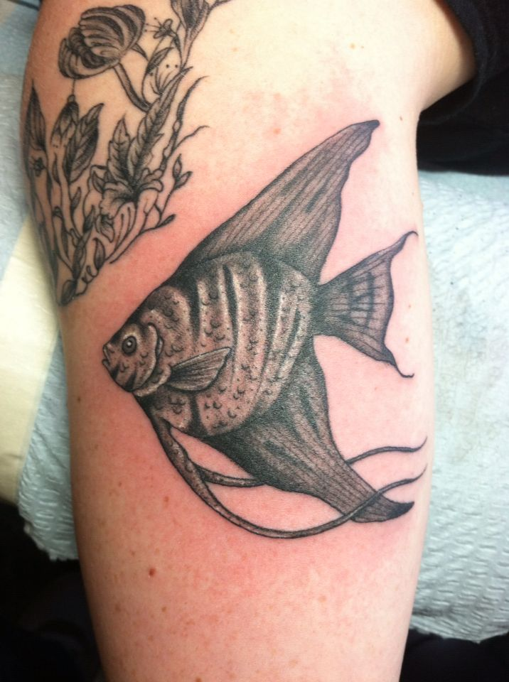 angelfish tattoo done at electric ladyland tattoo new orleans scott rh pinterest ca angelfish tattoo meaning angelfish tattoo meaning
