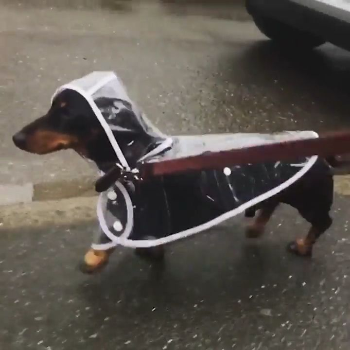 Everyone need this transparent coat for their pets. Please follow Animals Board for more videos