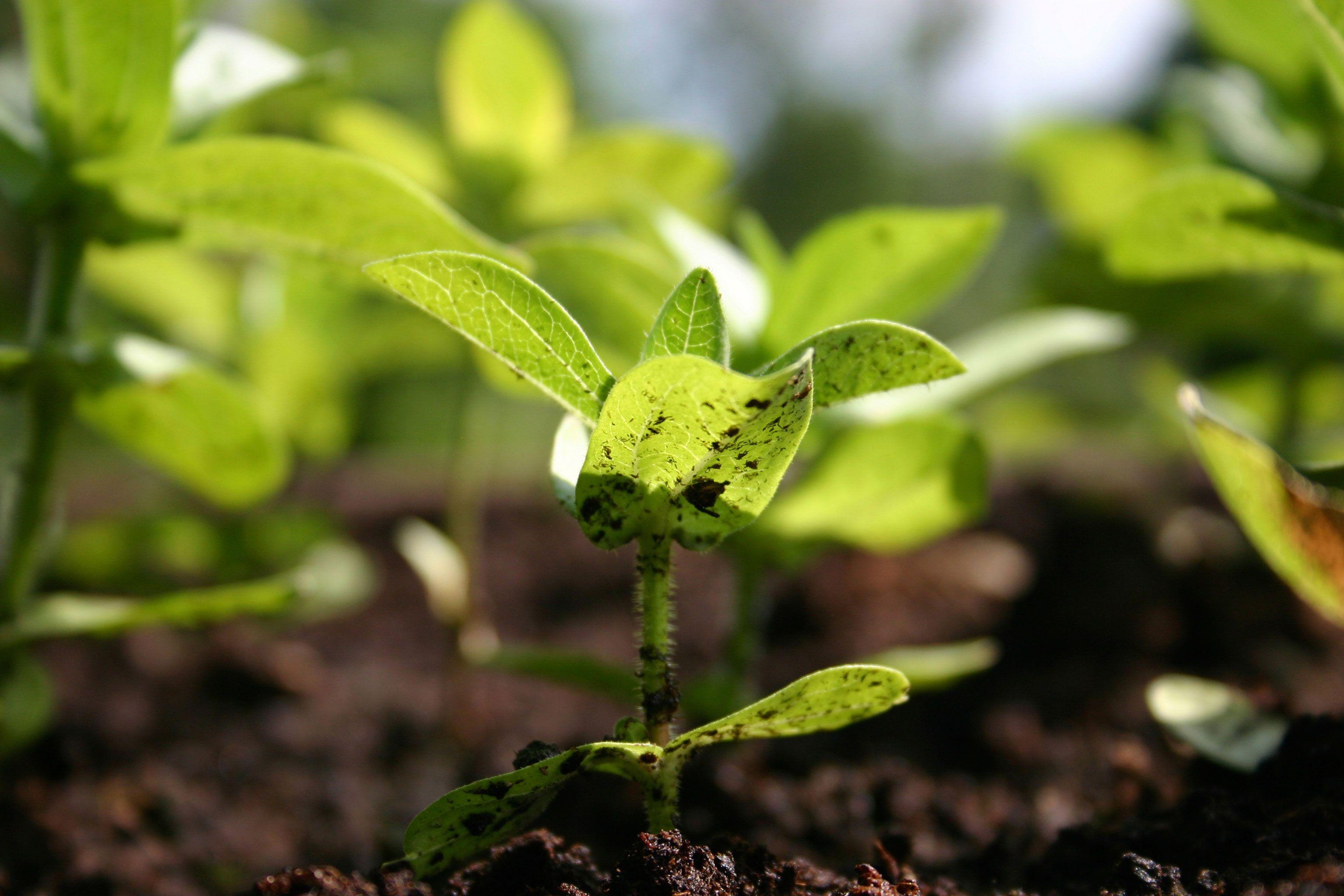 ecological-farming.jpg (3072×2048)