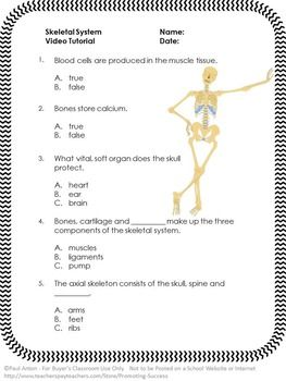 Printables The Skeletal System Worksheet Answer Key free skeletal system video and worksheet science human body here is a or quiz answer key to go along with youtube the vi