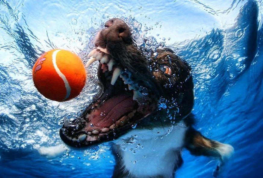 O cachorro e a bola