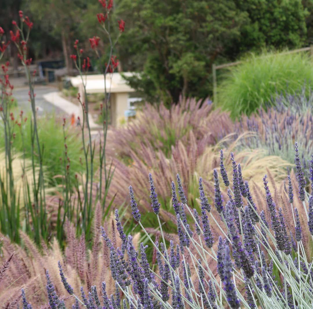 Solpaisajismo On Instagram Prairie Garden Garden Inspiration Lawn And Garden