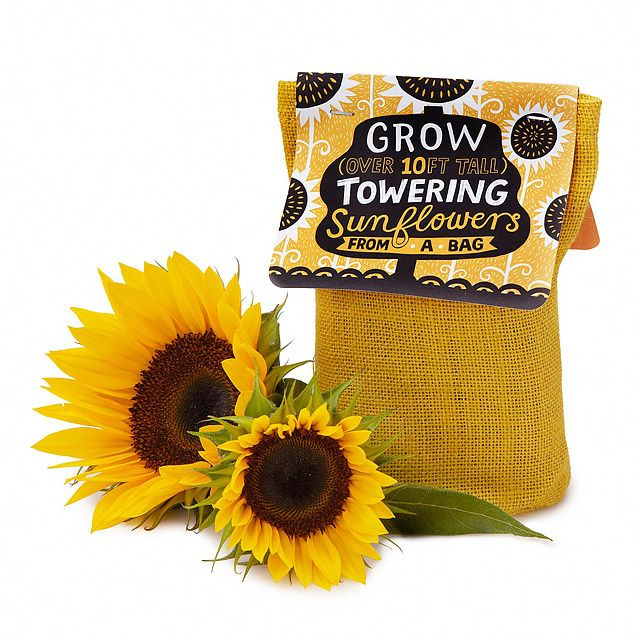 Sunflower In A Bag Grow Kit Sunflower Seeds Grow Kit Best Friend Christmas Gifts Christmas Gifts For Friends