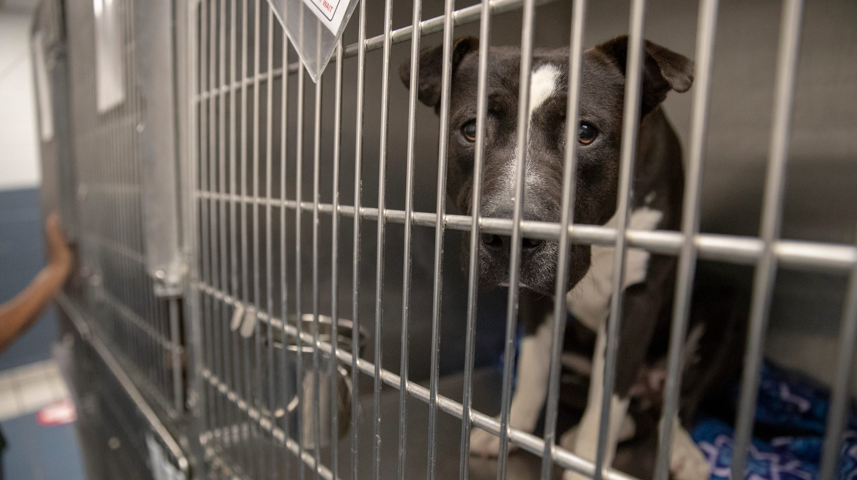 If pet adoptions don't pick up, 'tough decisions' will be