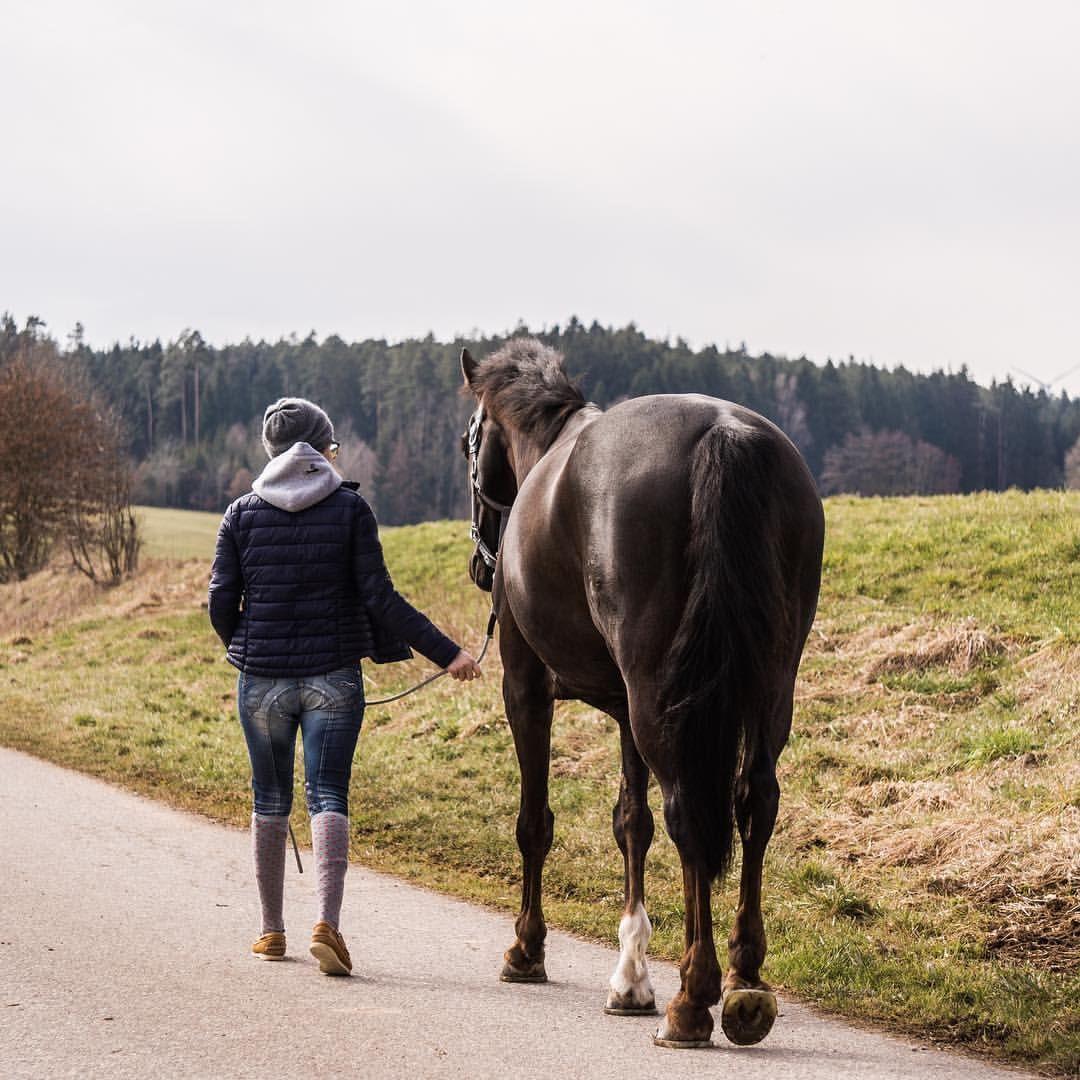 Arsch pferde Pferde Pimmel