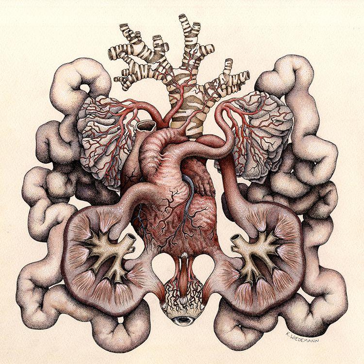 Katy Wiedemann\'s Hybrid Anatomies   Anatomy, Animal anatomy and ...
