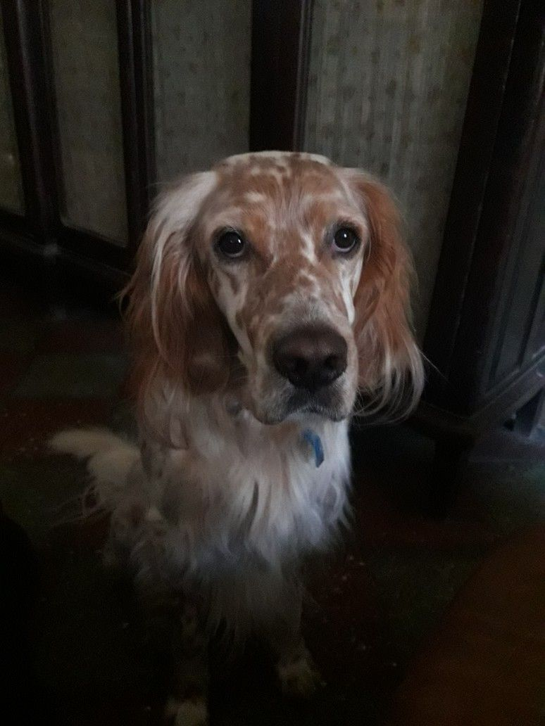 Craigslist Maine Free Dogs