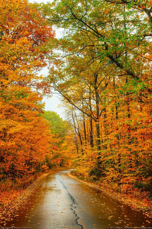 Autumn Canopy and Leaves | Autumn | Nature, Autumn scenery ...
