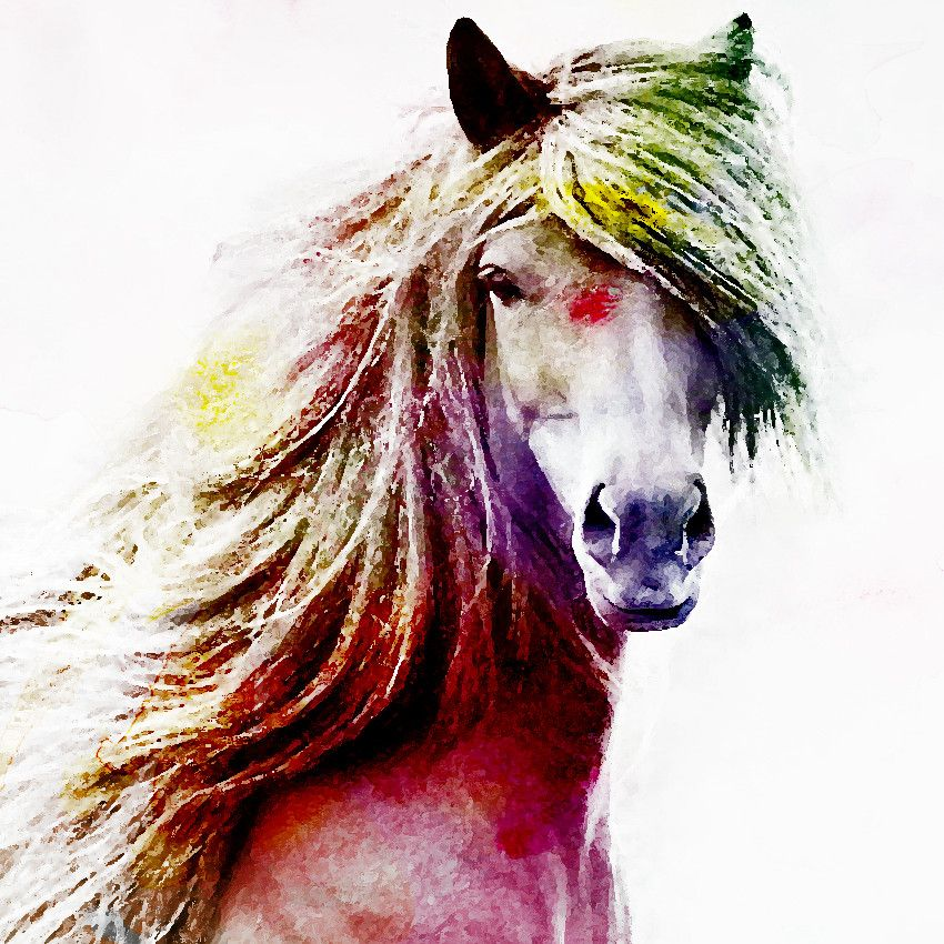 Pferd, bunt, bearbeitet