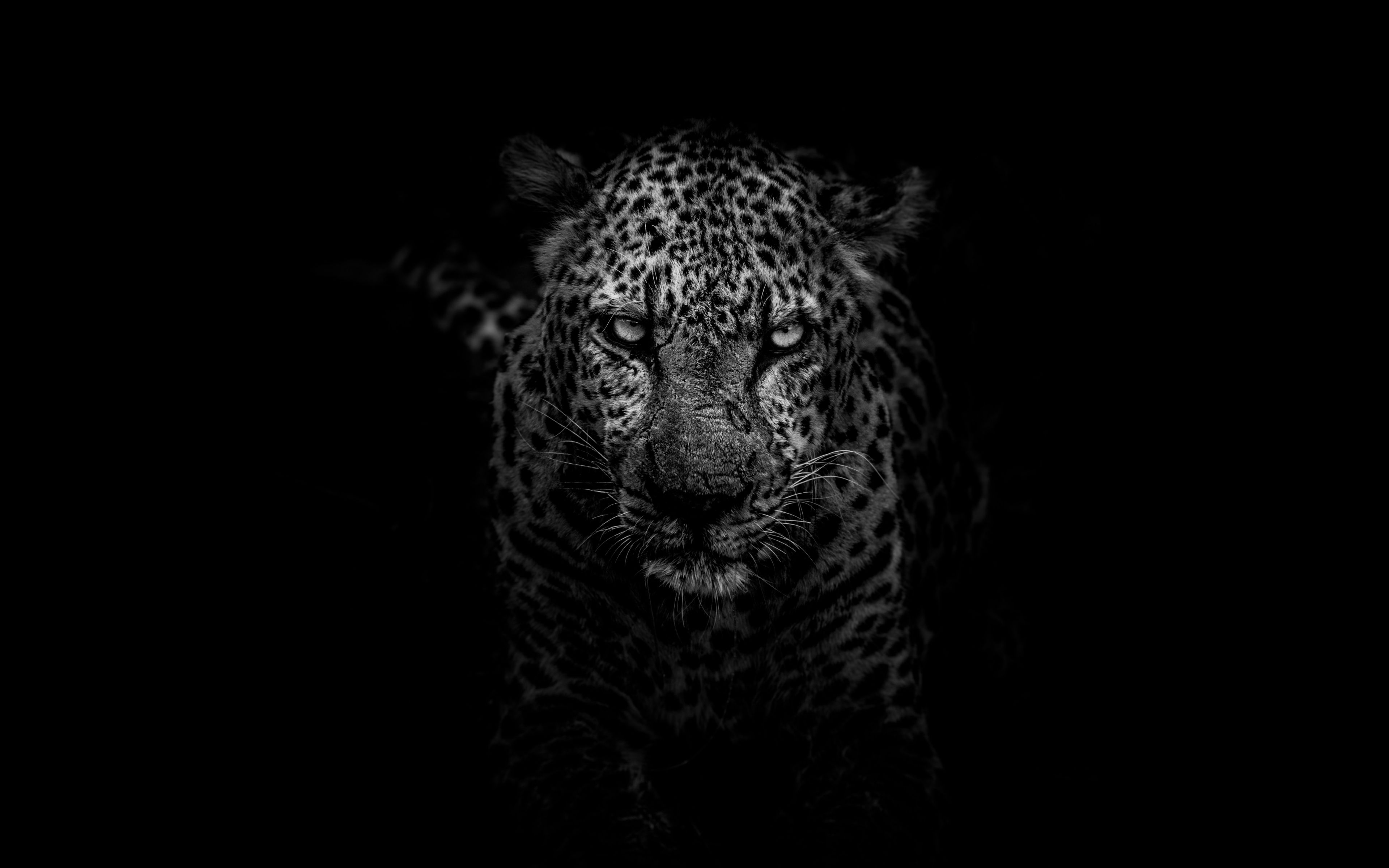 High Definition Quality Desktop Wallpapers For Any Screen Size And Resolutions 1920 1080 Cheetah Wallpaper Jaguar Wallpaper Animal Wallpaper
