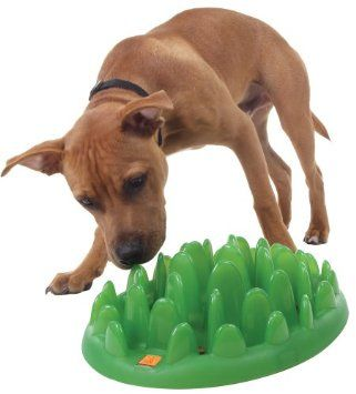 Amazon Com Northmate Green Modern Interactive Dog Feeder Pet