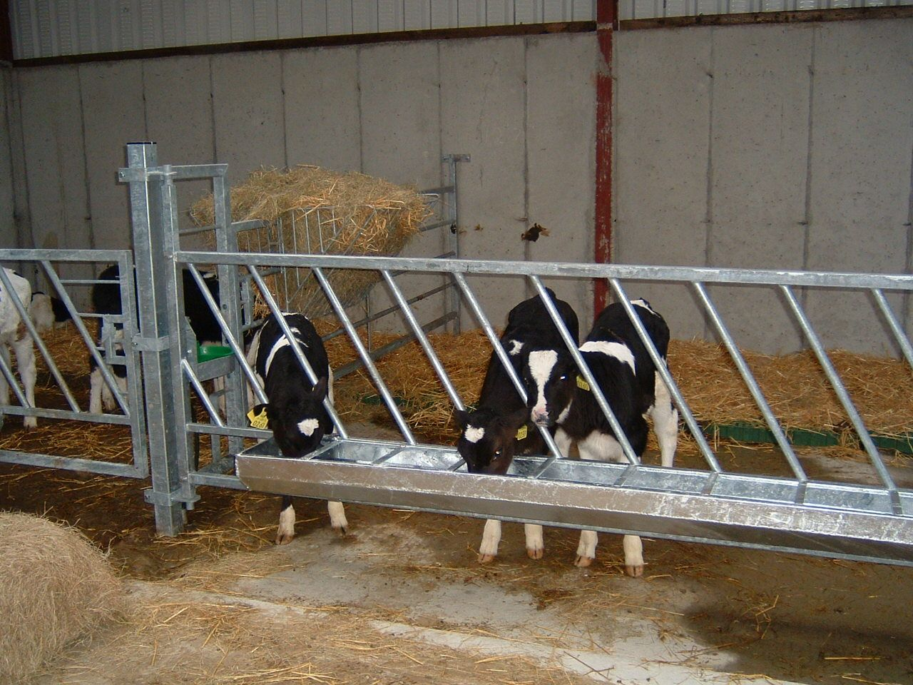 Image Result For Calf Sheds In Australia Cattle Farming Livestock Barn Cattle Ranching