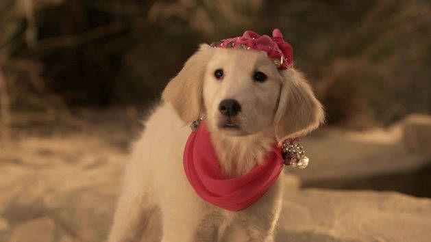 Rosebud 1 Puppy Clips Snow Buddies Disney Video Air Bud