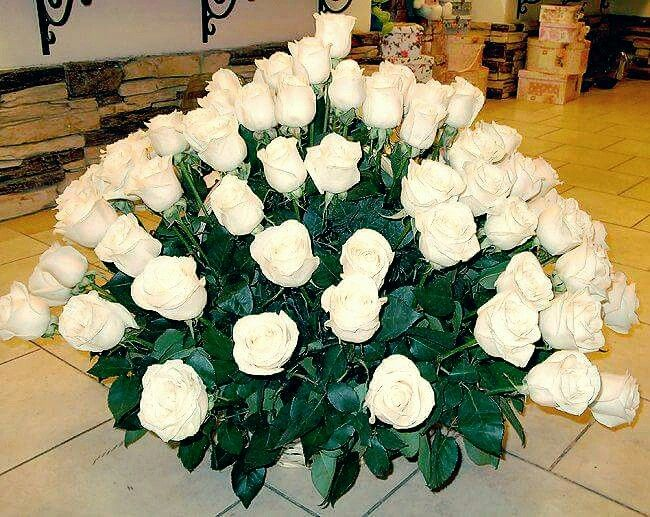 Rosas blancas....