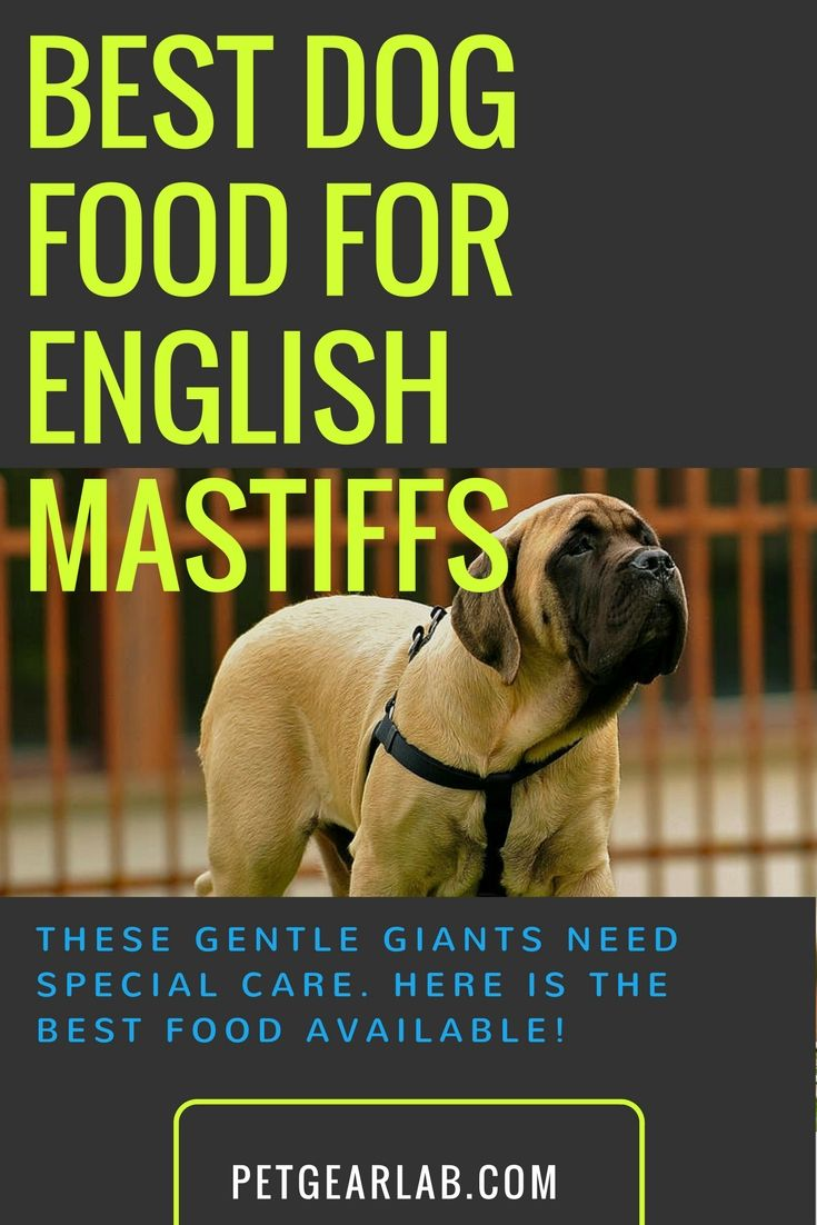 What's Best Dog Food For English Mastiff? Our top picks