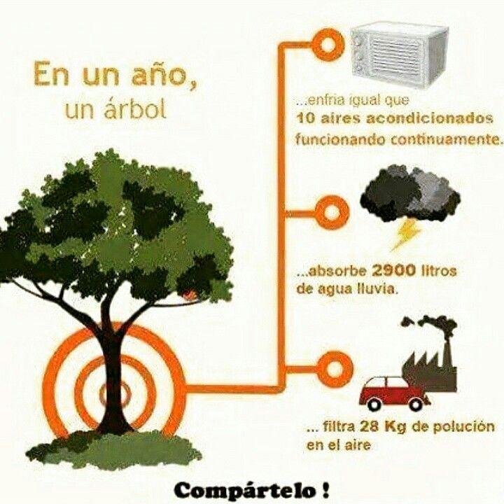 La impirtancia de los arboles (control del cambio climatico)