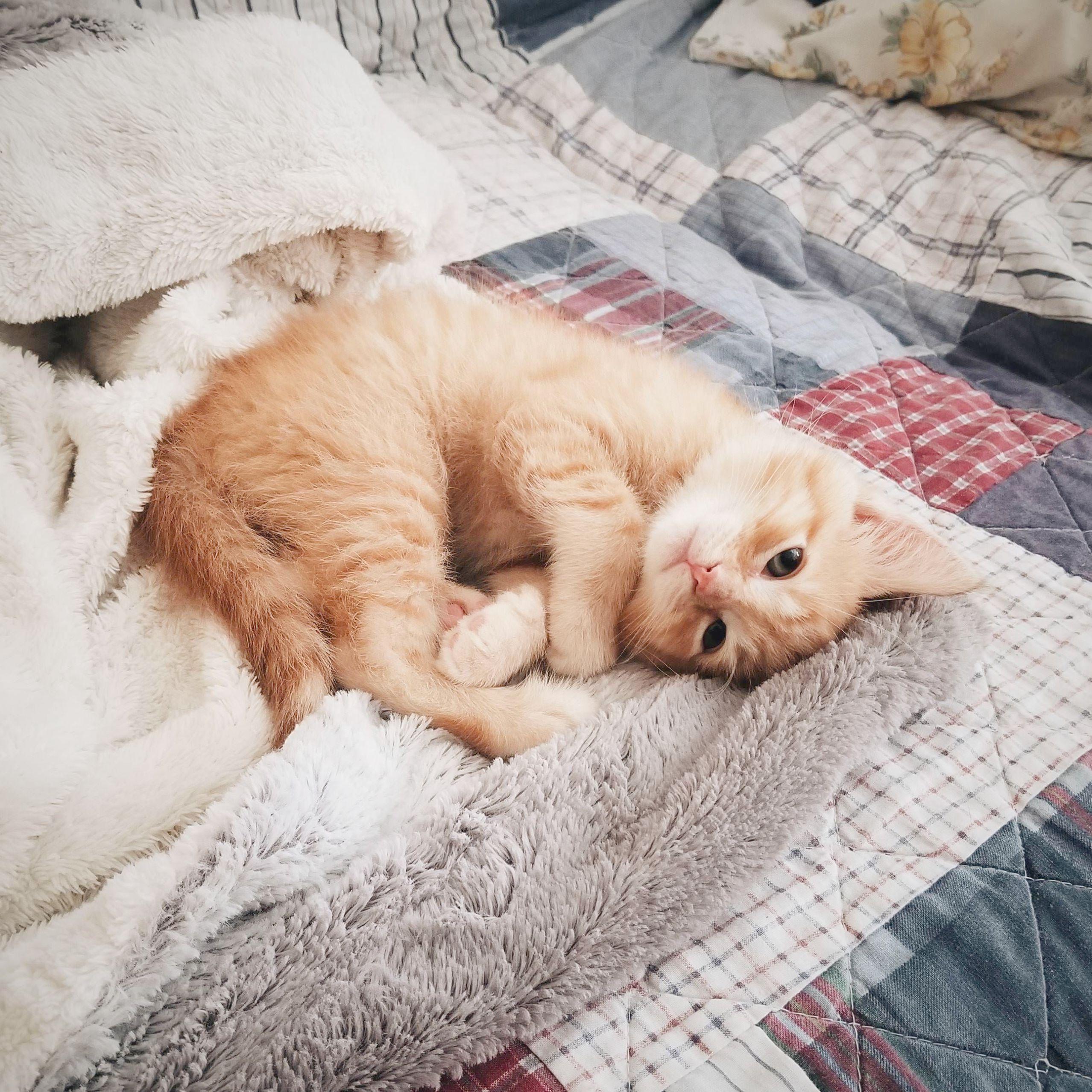 Funny Cat Desktop Wallpapers Wallpaper Cave Kucing Menggambar Kucing Gambar Kucing Lucu