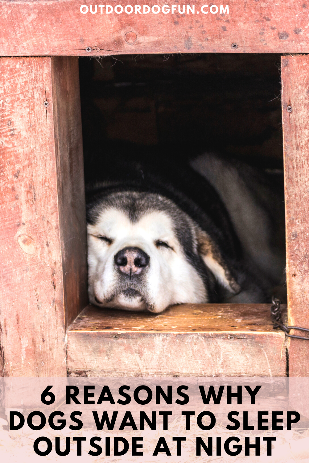 6 Reasons Why Dogs Want To Sleep Outside At Night Sleeping Dogs Every Dog Breed Dog Care