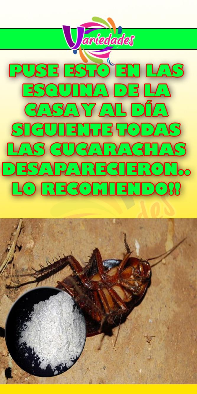Como Acabar Con La Plaga De Cucarachas Chiquitas Puse Esto En Las Esquina De La Casa Y Al Dia Siguiente Todas Las