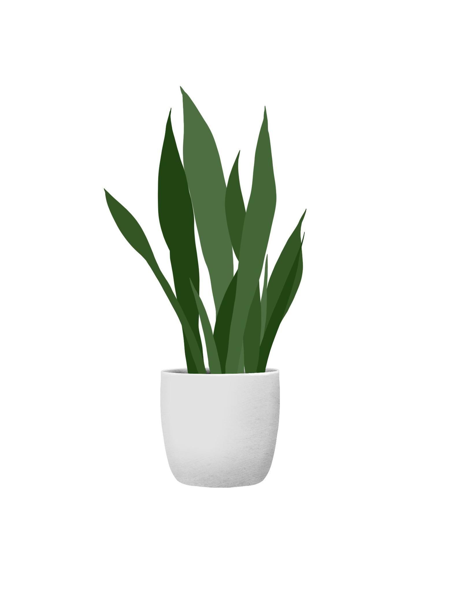 9 Plants Package Vector Clipart Png Ai Illustration Collage Eps Plant Vector Flower Phone Wallpaper Plants