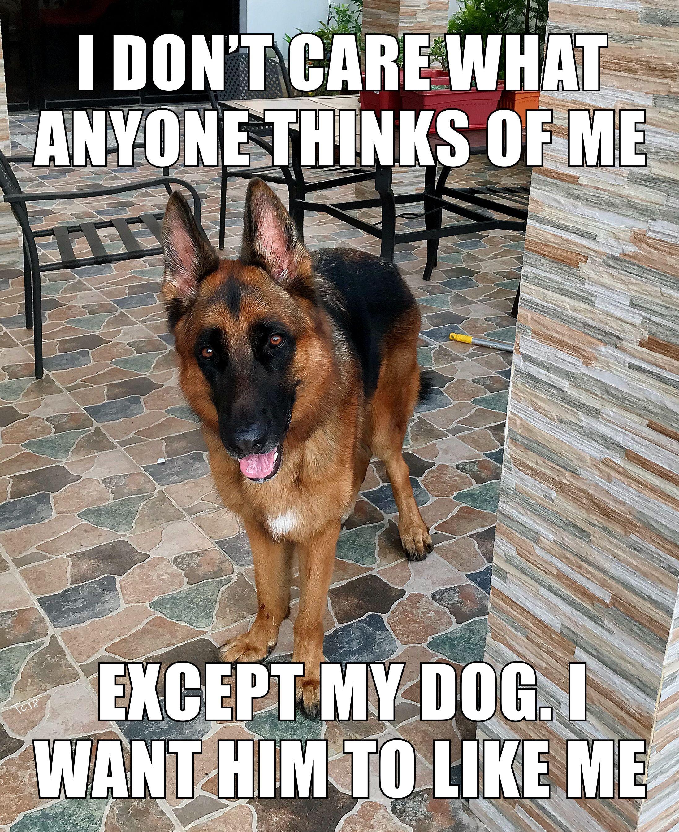 The German Shepherd Ares German Shepherd Funny German