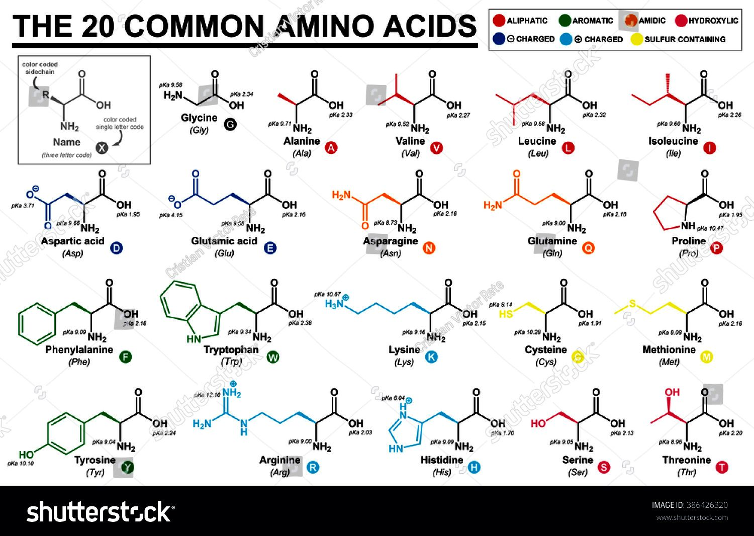 The 20 Common Amino Acids