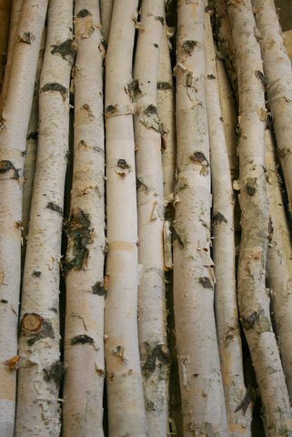 White Birch Poles Birch Branches Birch Logs Birch