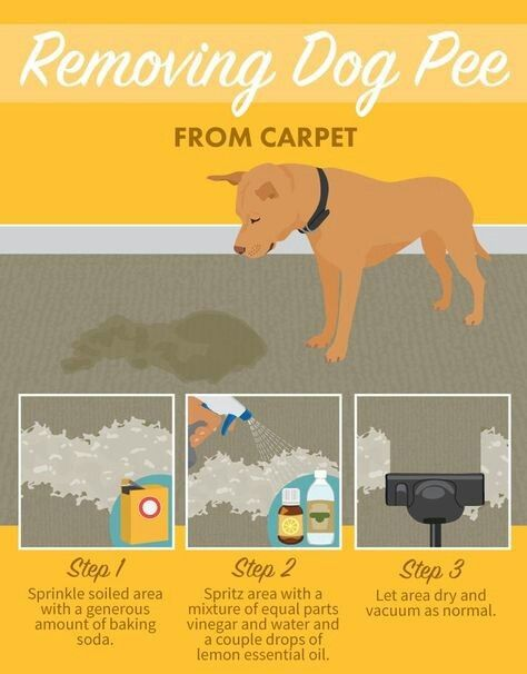 Pin By Fayetta On Animals And Other Things Dogs Dog Pee