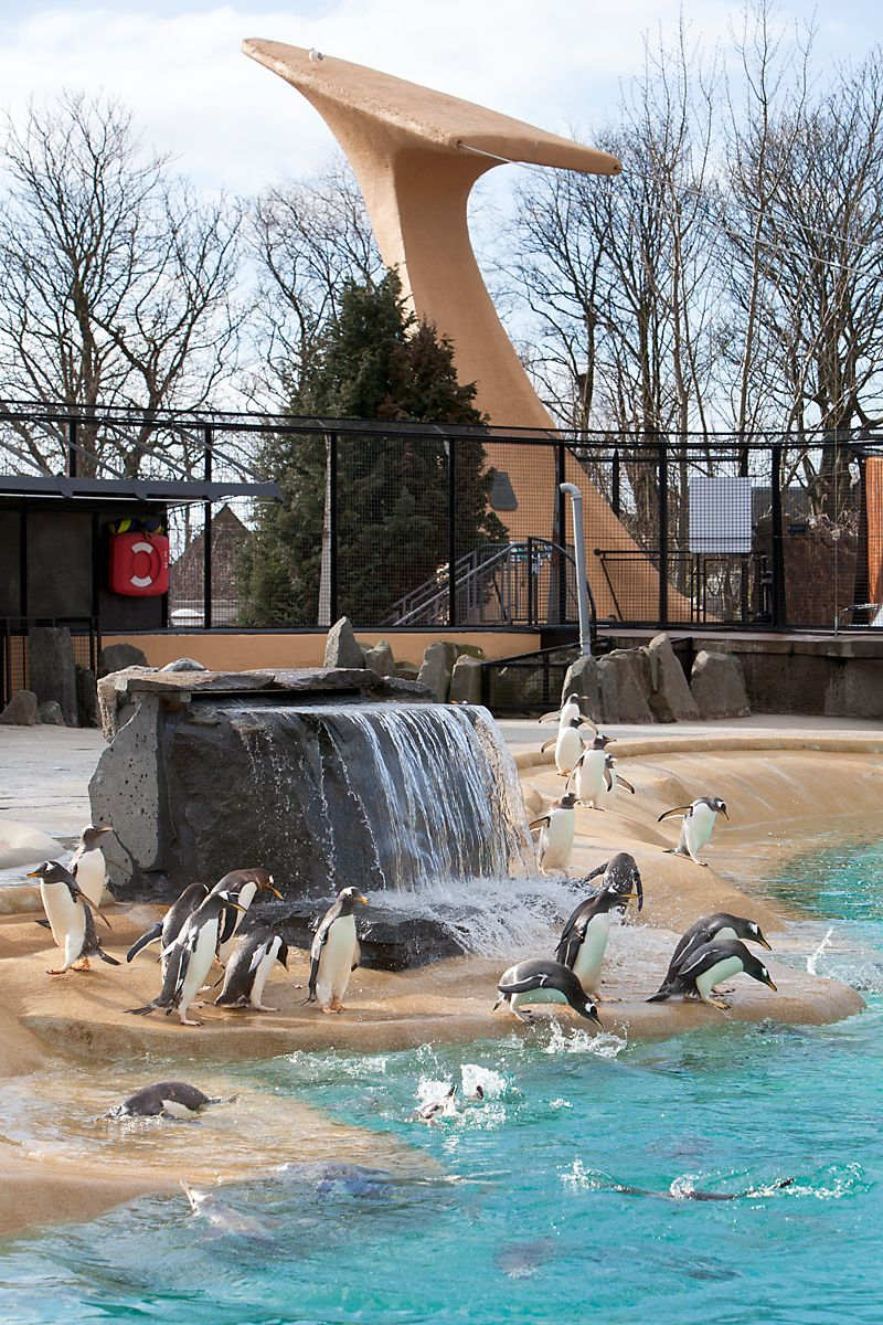 An Addagrip Installation At The Penguin Enclosure At Edinburgh Zoo The 30mm Application On The Nesting Area Allows Surface W Edinburgh Zoo Swimming Pools Pool