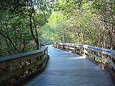 The Boardwalk Down To The Beach At Clam Pass Beach Park Naples Fl Forest Resort Naples Beach Mangrove Forest